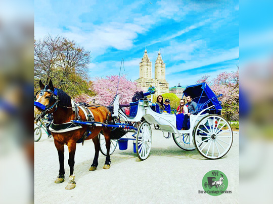 VIP Central Park carriage ride with photo stop🐴🎩📸